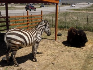 Feed The Animals at Exit 2 On The Way to Heber